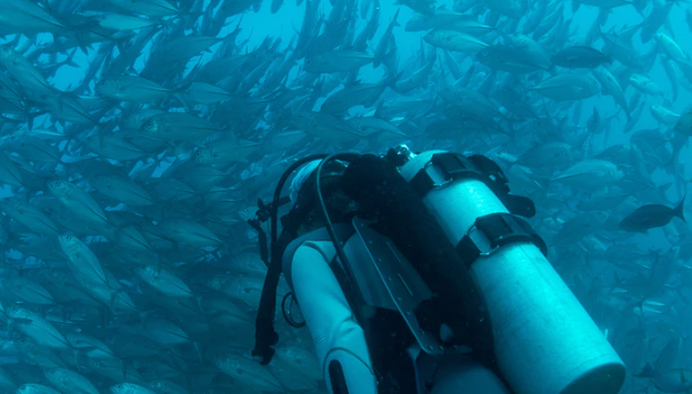 A Scuba Diver With A Huge Swarm Of Fish